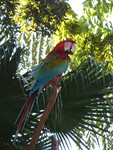 Parrot up in the trees, Discovery Cove